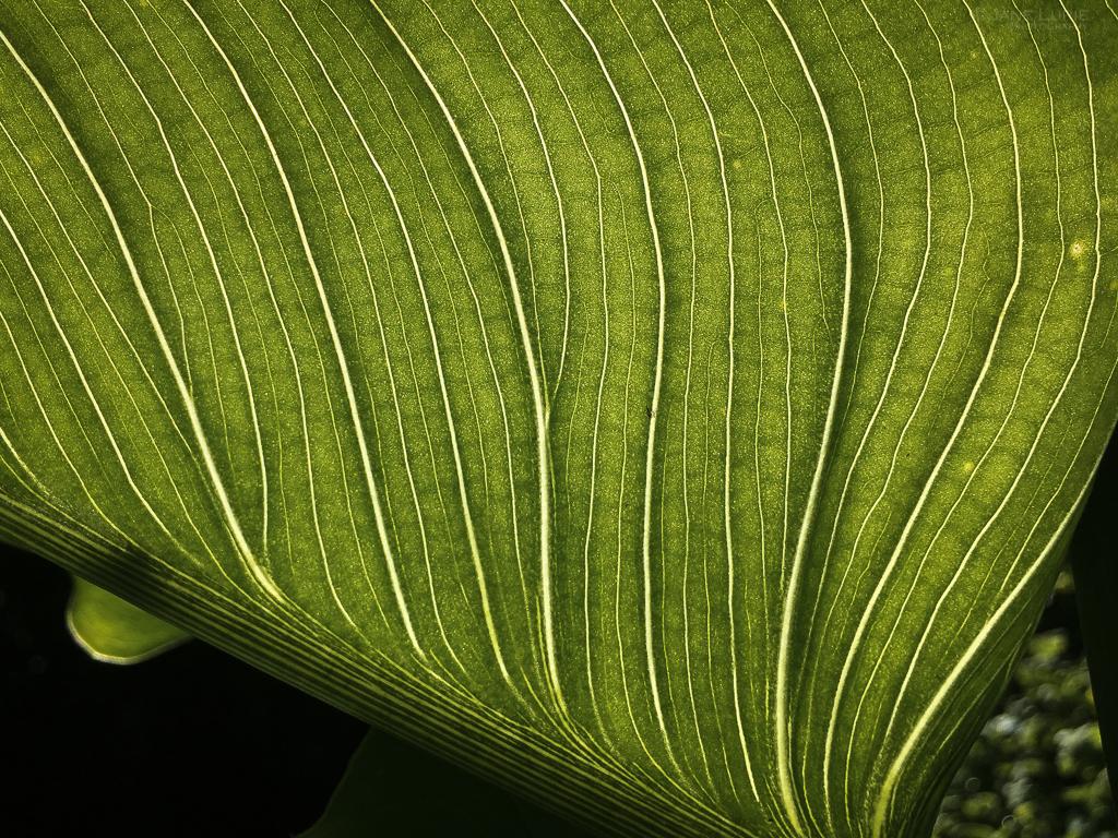 Photography, Nature, Close-up