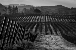 Landscape, Vineyard, California, Wine, Napa, Nature, Monochrome, Black and White