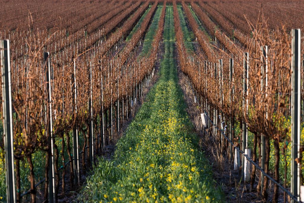 Landscape, Vineyard, California, Wine, Napa, Nature, Monochrome, Black and White