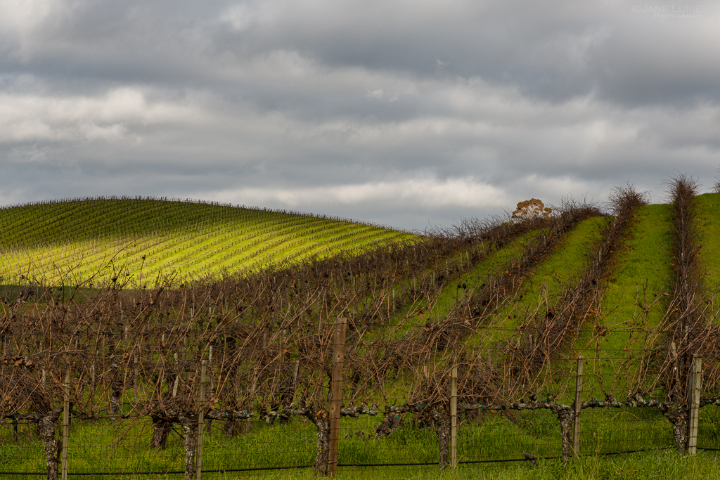 Landscape, Vineyard, California, Wine, Napa, Nature,