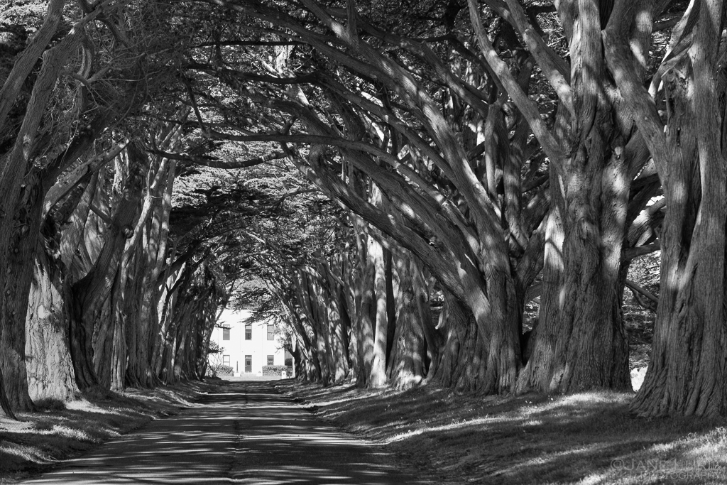 Historic, Architecture, Trees, Nature, California, Monochrome, Photography