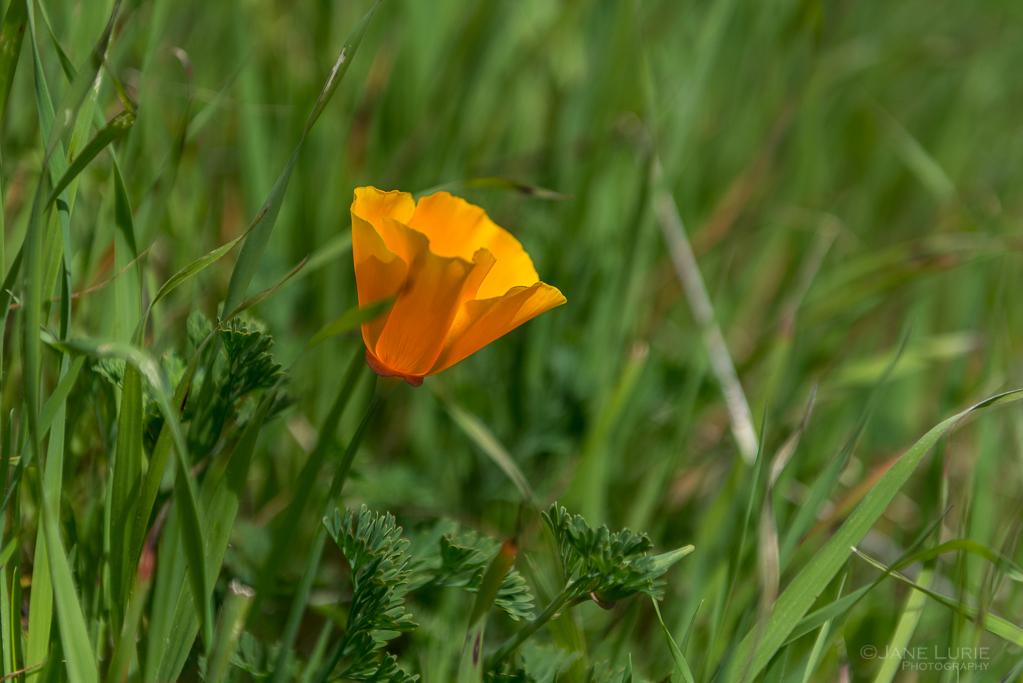 Nature, California, Photography, Spring, Landscapes, Nikon