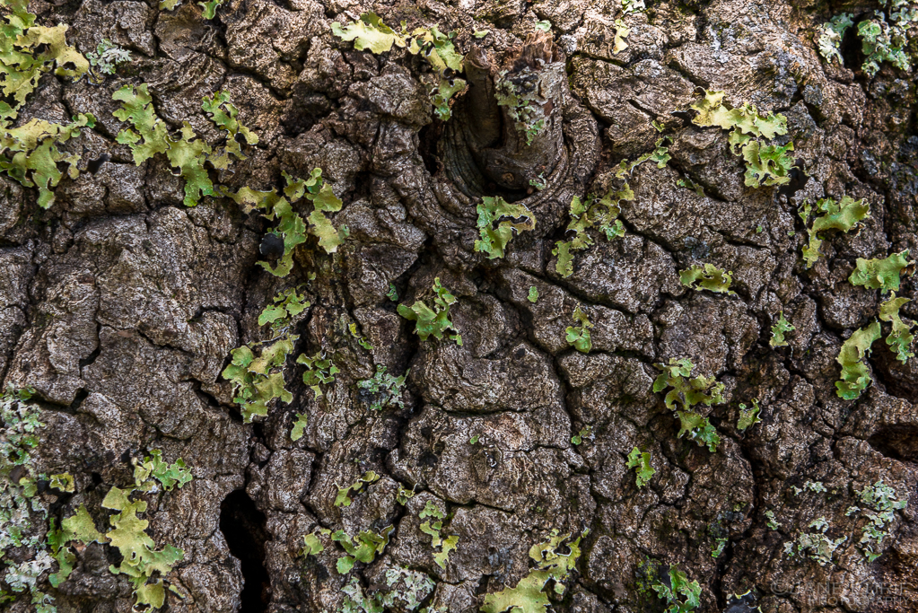 Nature, Trees, California, Close-Up, Photography, Nikon