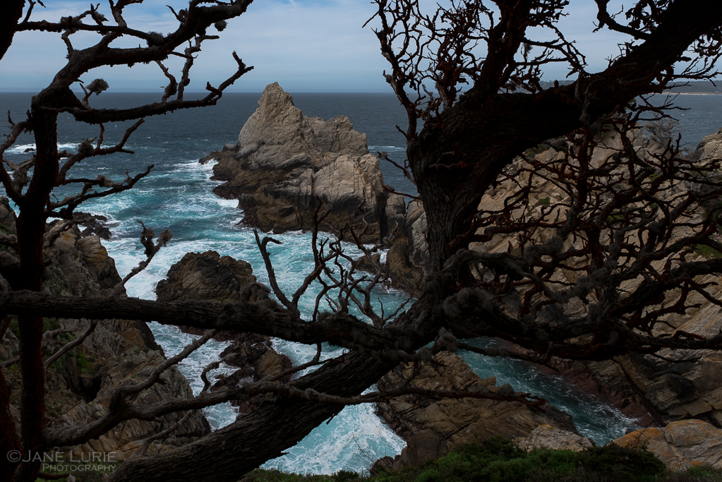Nature, Trees, California, Close-Up, Photography, Nikon