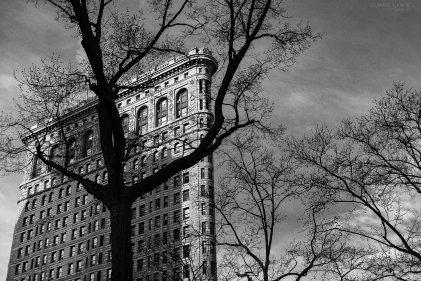 Flatiron Building and Tree, New York