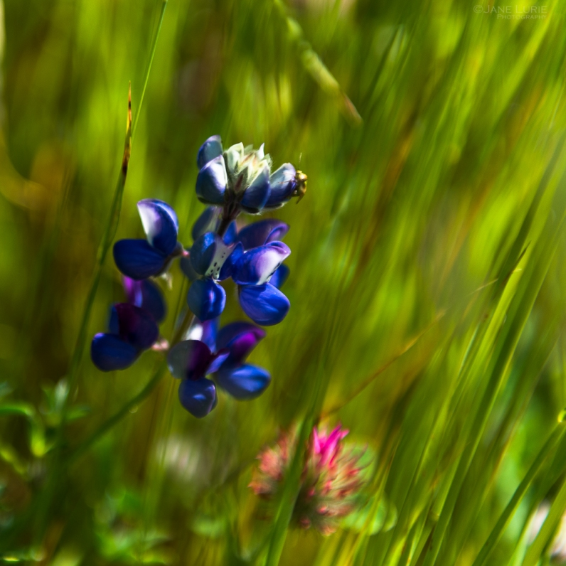 Wildflower, Nature, Photography, Flower, Color, Macro, Landscape, Nikon