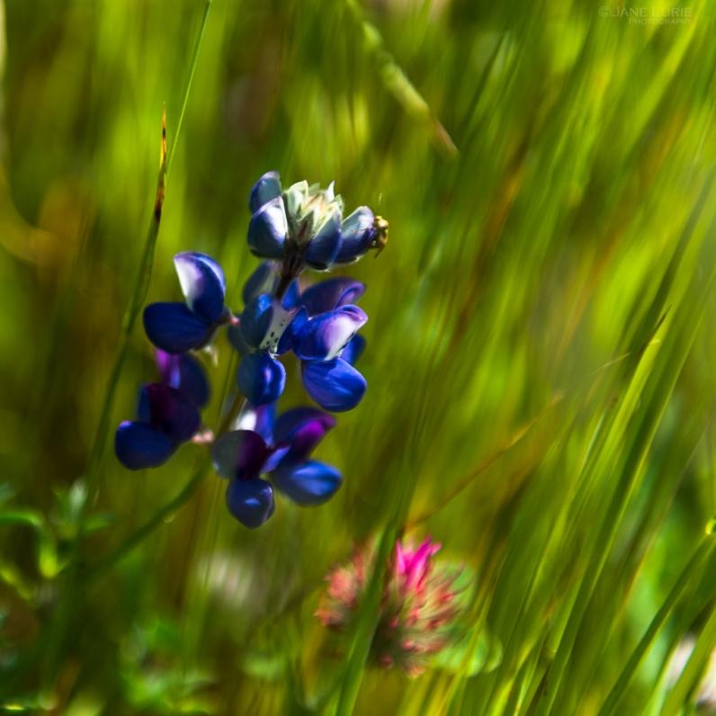 Wildflower, Nature, Photography, Flower, Color, Macro, Landscape, Nikon