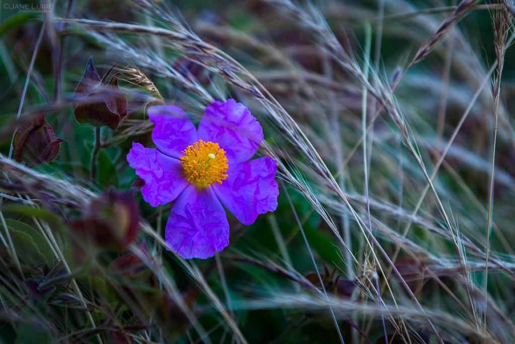 Landscape, Photography, California, Nature, Coastal Photography, Close-Up