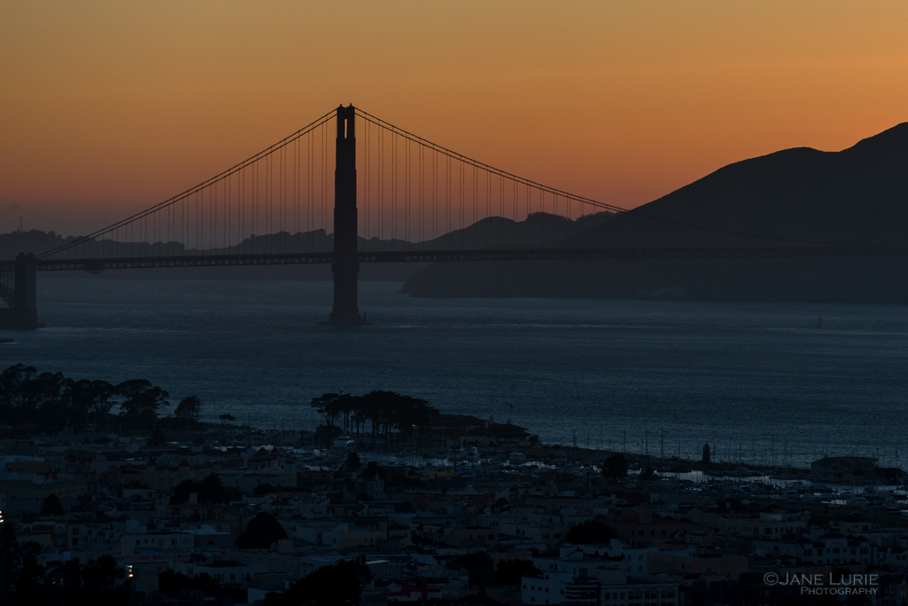 Nature, Whales, San Francisco, City, Golden Hour, Photography,