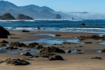 Nature, Photography, Oregon, Cannon Beach, Ocean, Sea Life,