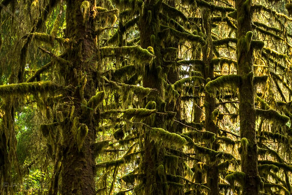 Landscapes, Photography, Nature, Art, Olympic Peninsula, Pacific Northwest, Nikon, Fujifilm