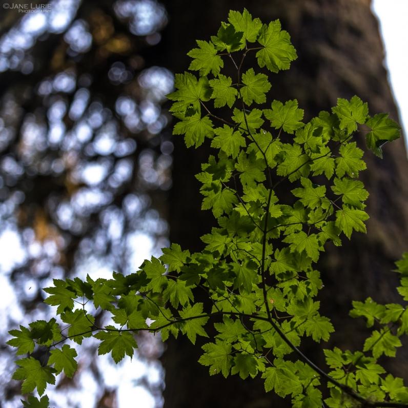 Photography, Nature, Nikon, Landscape