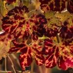 Landscape, Photography, California, Nikon, Vineyard, Nature, Inspiration
