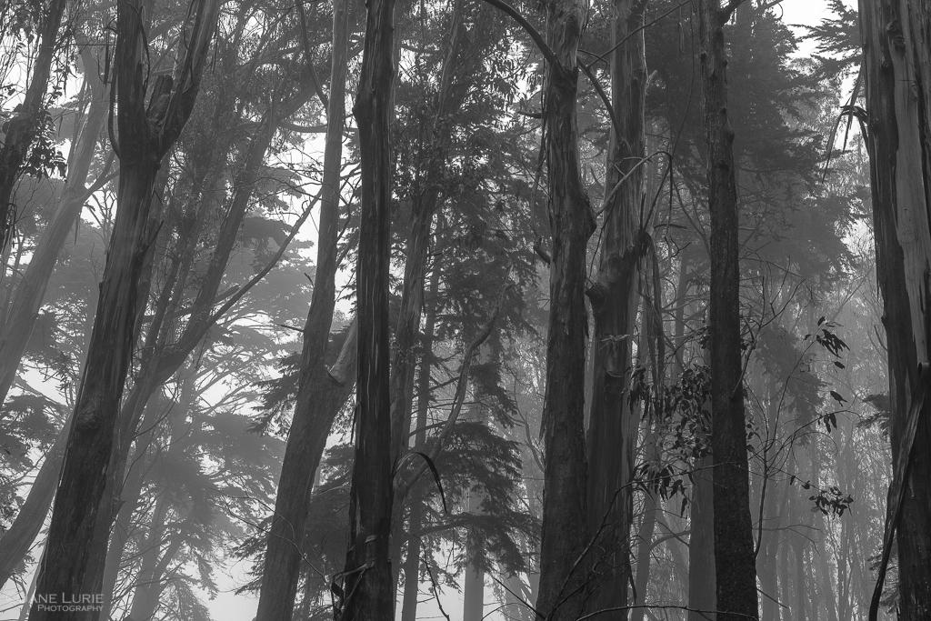 Rain, Monochrome, Black and White, Landscapes, Photography, San Francisco, California, Golden Gate Bridge, Noir, Fujifilm X-T2,