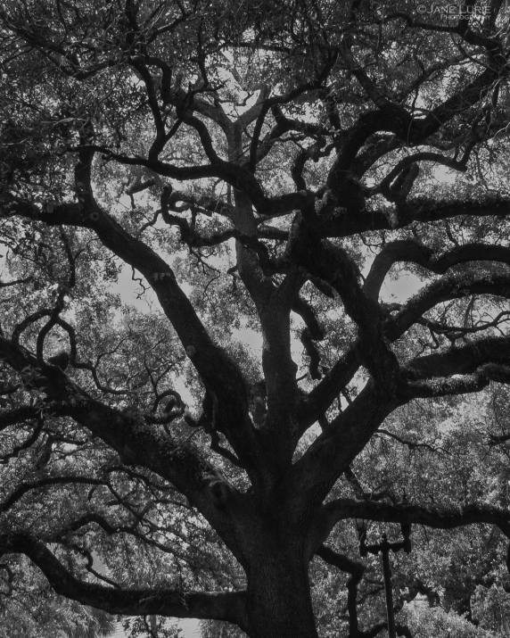 Black and White, Monochrome, Landscape, Tree, Abstract, Nature, Photography