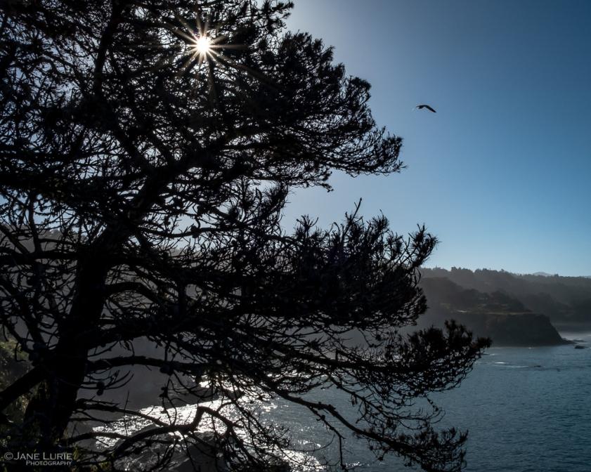 Photography, Landscape, Nature, Fujifilm X-T2, California, Coast, Environment