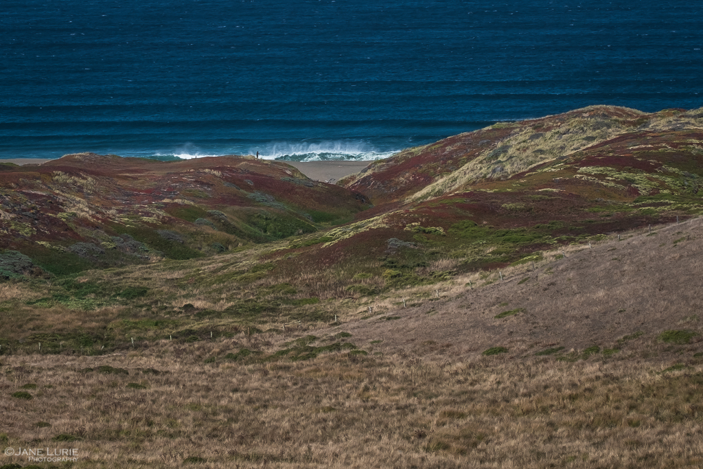 California, Nature, Landscape Photography, Fujifilm X-T2, Plants, Ocean, Color, Autumn
