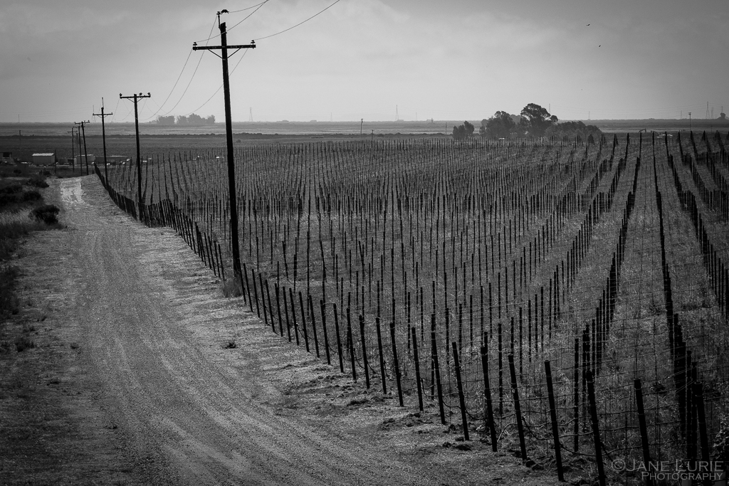 Landscape, Photography, Fujifilm X-T2, Wine Country, Sonoma, California, Nature, Vineyard, Monochrome, Black and White