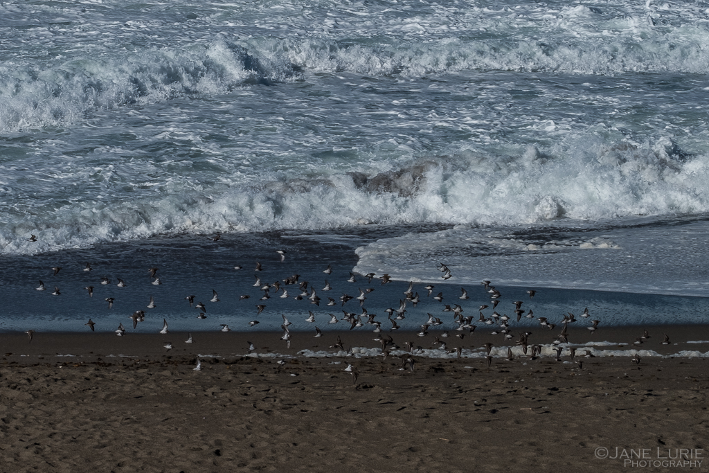 Landscape, California, Ocean, Nature Photography, Fujifilm X-T2,