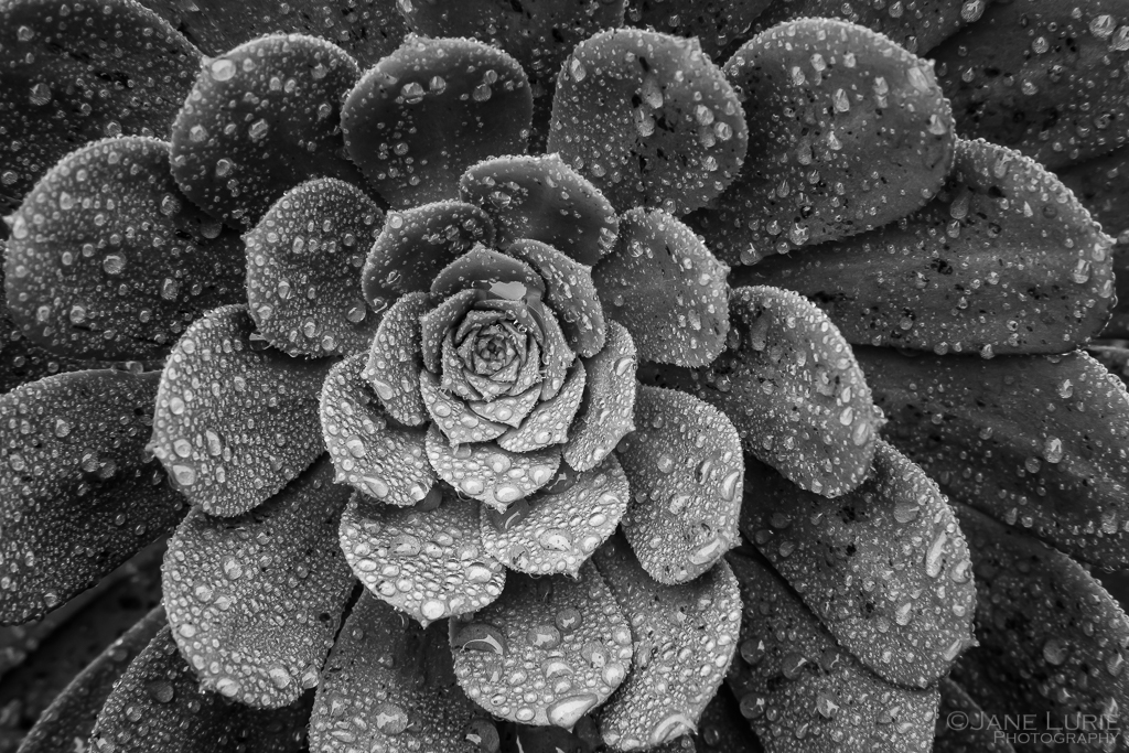 Nature, Photography, Close-up, Rain, Macro, Urban, California, Fujifilm X-T2