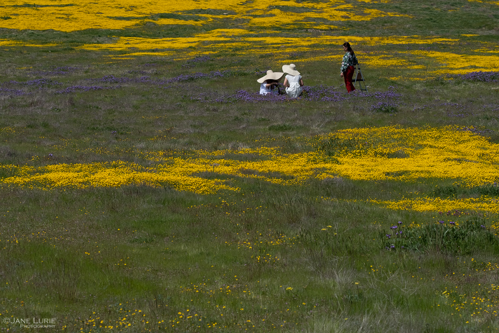 Carrizo Plain National Monument, Wildflowers, Nature Photography, California, Carrizo Plain, Landscape Photography, Fujifilm X-T2
