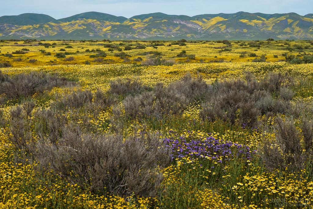 Carrizo Plain National Monument, Wildflowers, Nature Photography, California, Carrizo Plain, Landscape Photography, Fujifilm X-T2