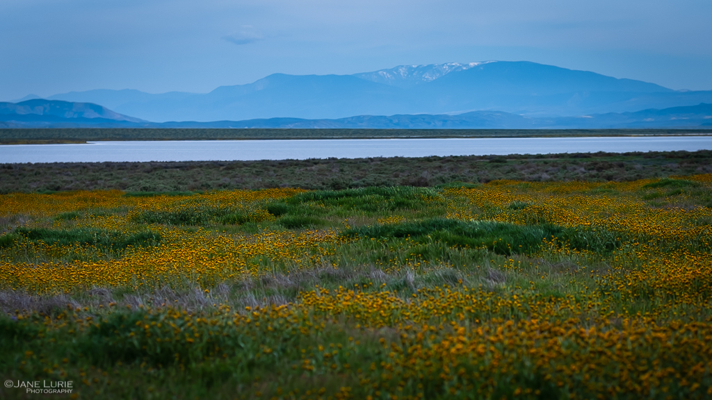 Landscape, Wildflowers, Fujifilm X-T2, California, Nature Photography