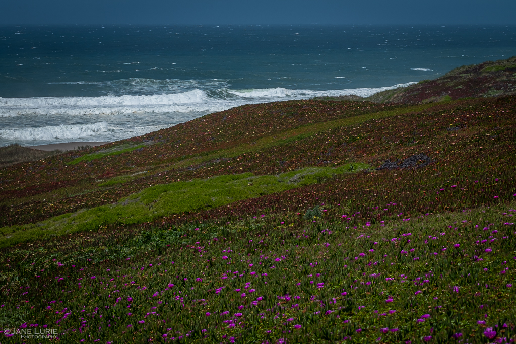 Fujifilm X-T2, Photography, Point Reyes National Seashore, Nature, Landscape Photography, Ocean, Flowers, Plants