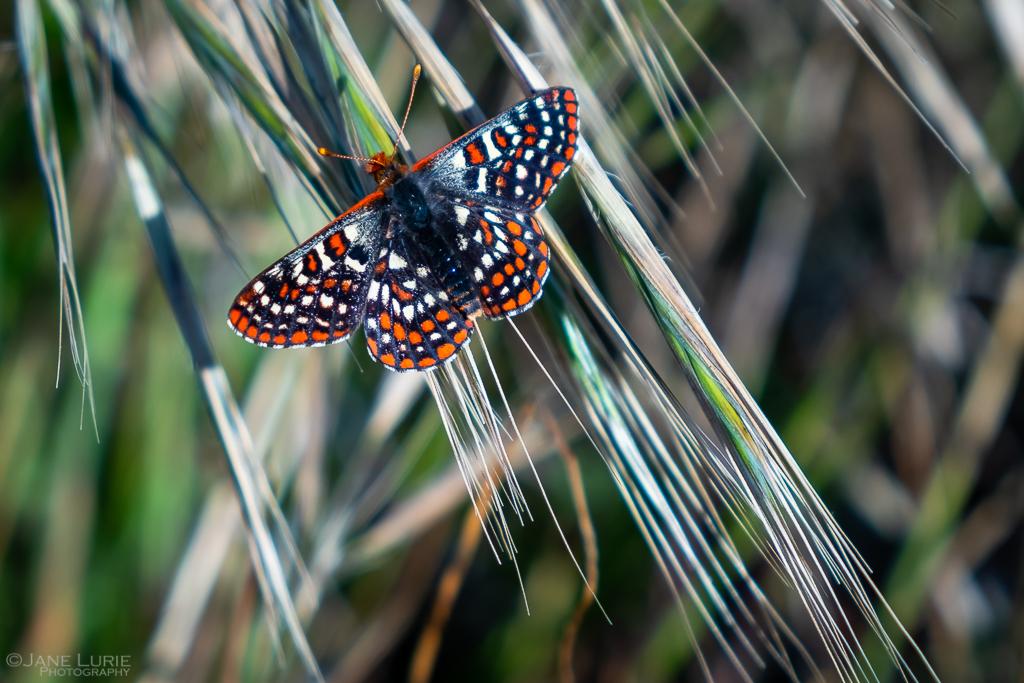 Landscape, Photography, California, Nature, Fujifilm X-T2