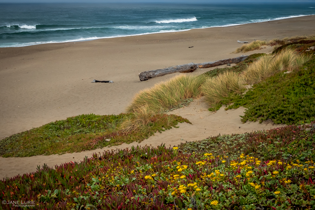 California, Landscape Photography, Nature, Point Reyes, Fujifilm X-T2, Photography