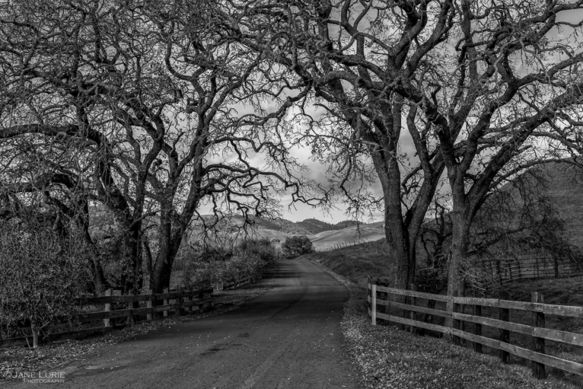 Landscape, Black and White, California, Napa