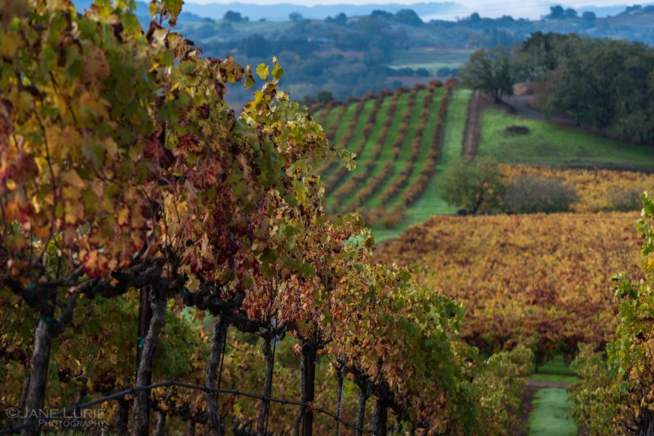 Landscape, Photography, Autumn, Nature