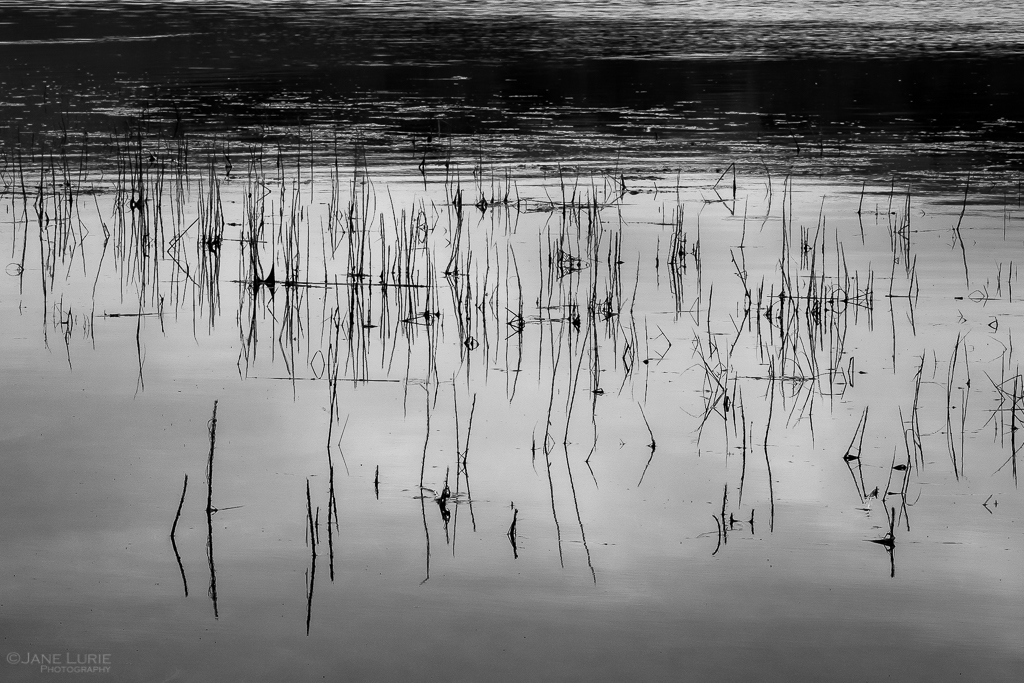 Monochrome Meditations: Tomales Bay and Point Reyes