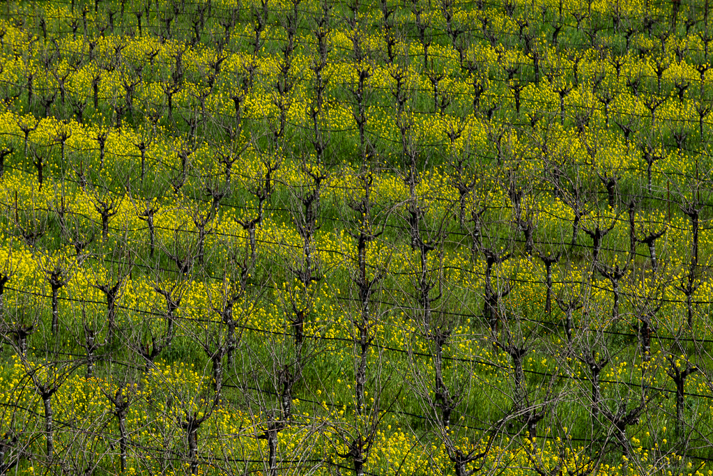 Springtime in Wine Country