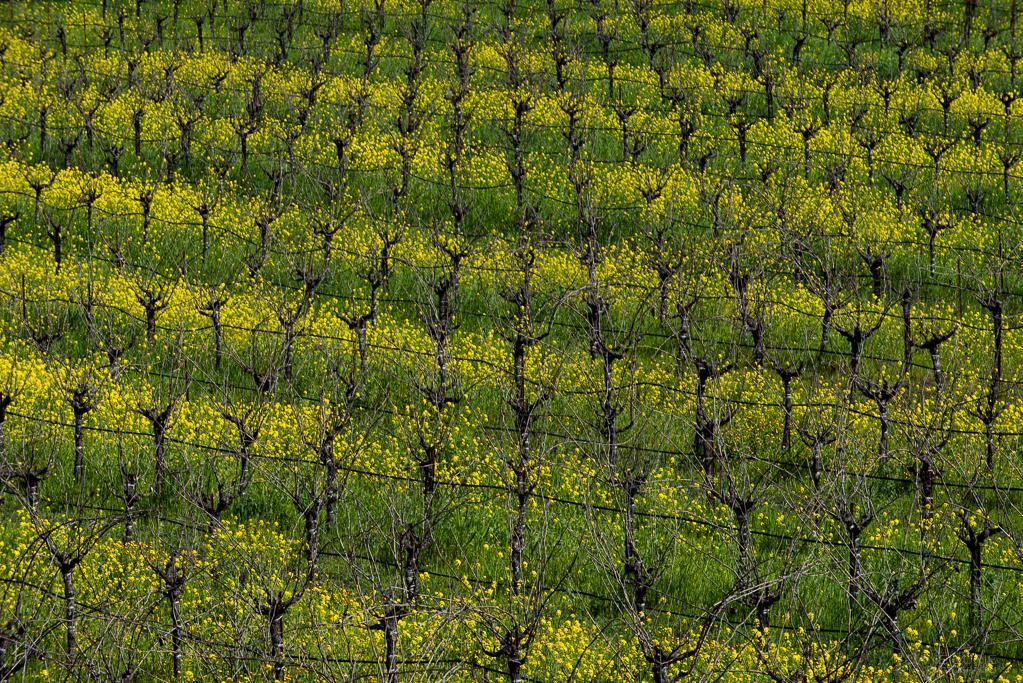 Springtime in WineCountry