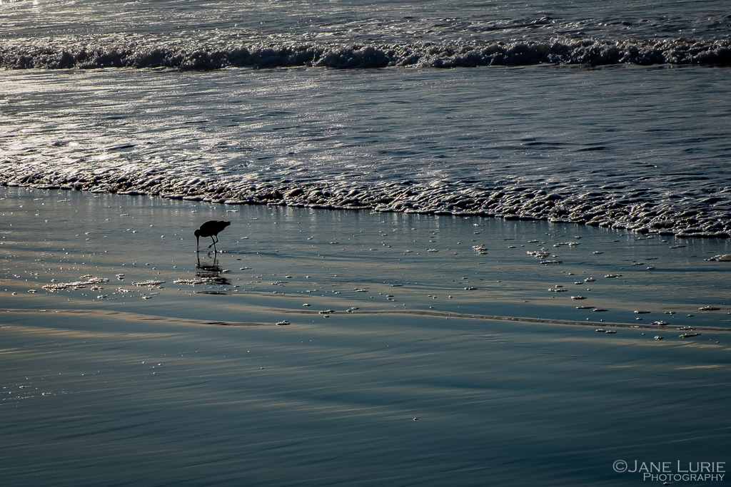 Nature, Ocean, Fujifilm X-T2 , Pelicans, Photography