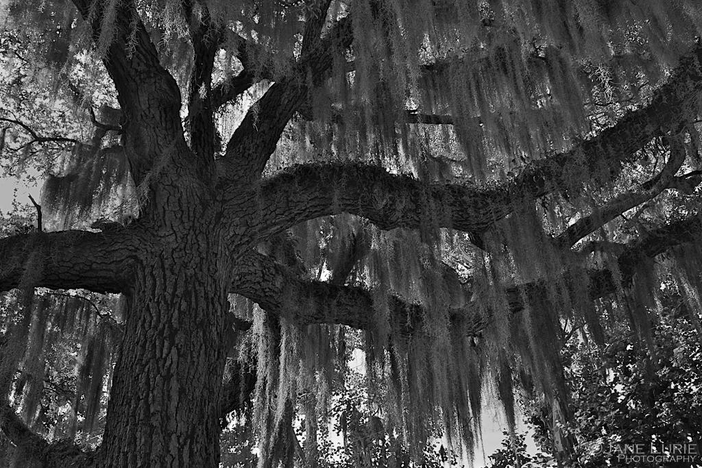 Inspiration, John Lewis, Trees, Photography, Remembrance, Oaks,