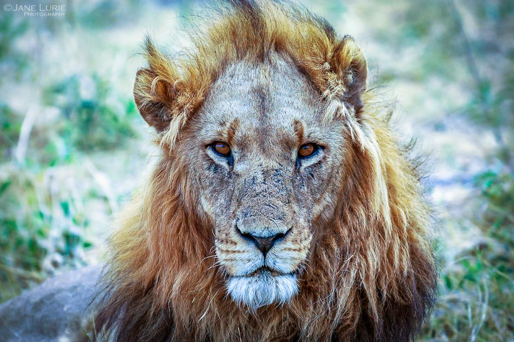 Africa, Photography, Wildlife, Travel, Animals, Nature