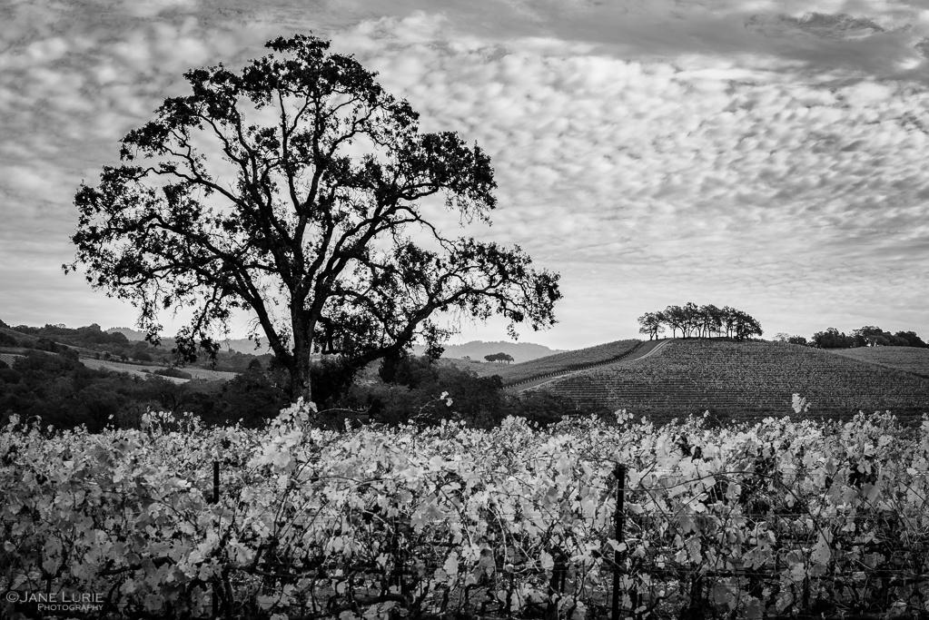 California, Landscape, Photography, Nature, Black and White, Monochrome