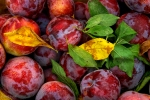 Color Photography, Nature, Flowers, Fruits, Close-ups, Photography
