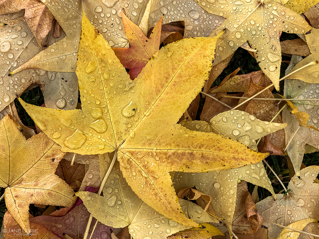 Autumn, Photography, Leaves, Close-up, Fall, Dew, Color