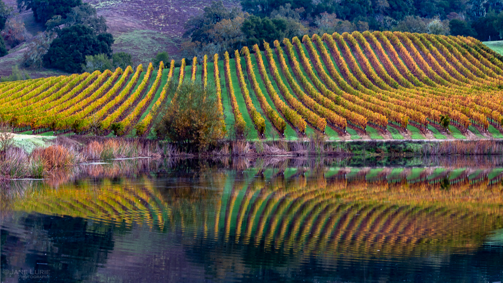 Autumn, Landscape, Photography, Fall, Seasons, Red, Orange, Vineyard, California