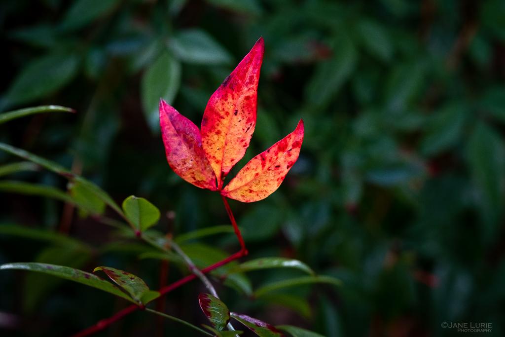 Rain, Nature, Flowers, Plants, Raindrops, Close-Up, Photography, Fujifilm X-T2, Fujinon 50mm f/2,