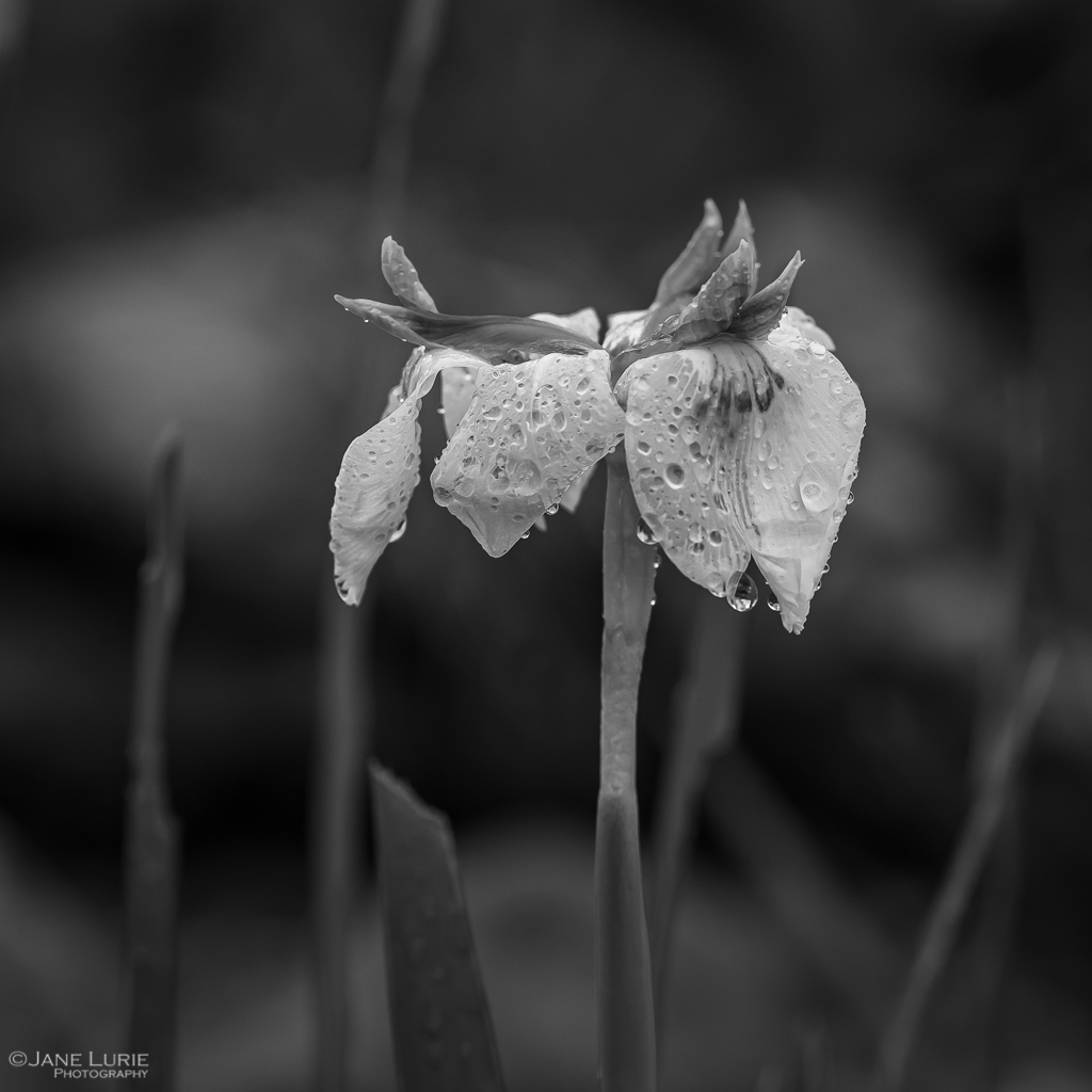 Nature, Monochrome, Close-Up, Black and White, Photography, Nikon, Fujifilm X-T2