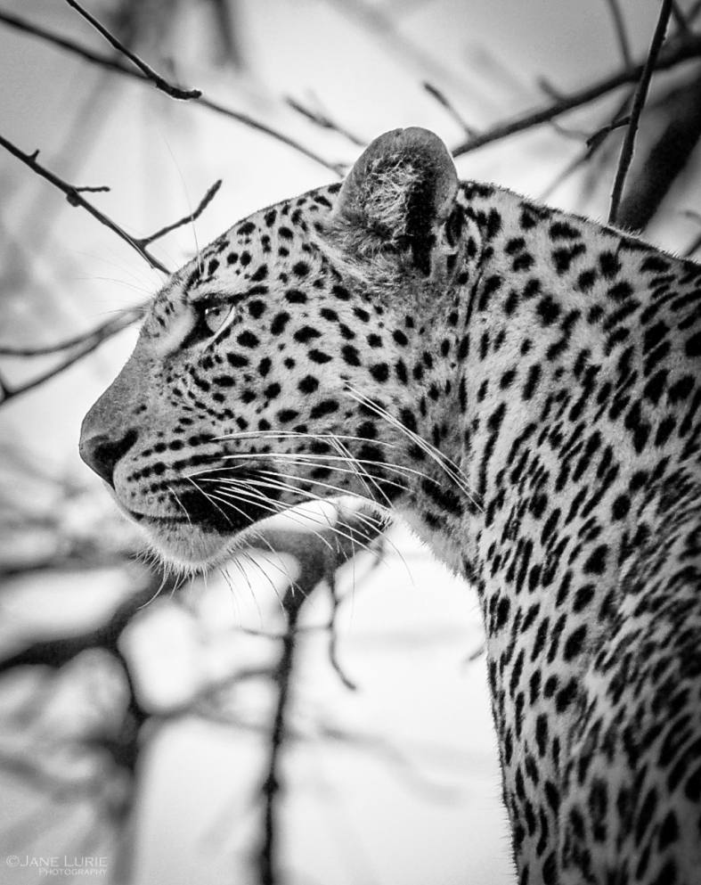 Wildlife Photograph, Nature, Nikon, Africa, Animals,