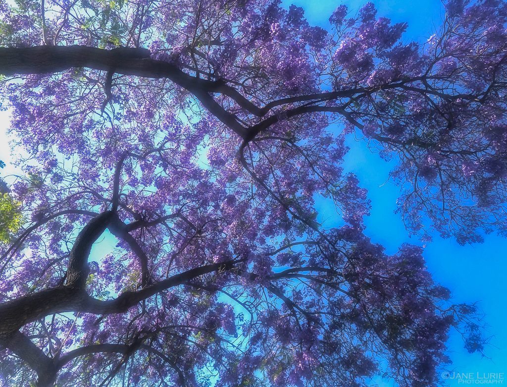 iPhone, Close-Ups, Street, Photography, Architecture, Flowers, Trees