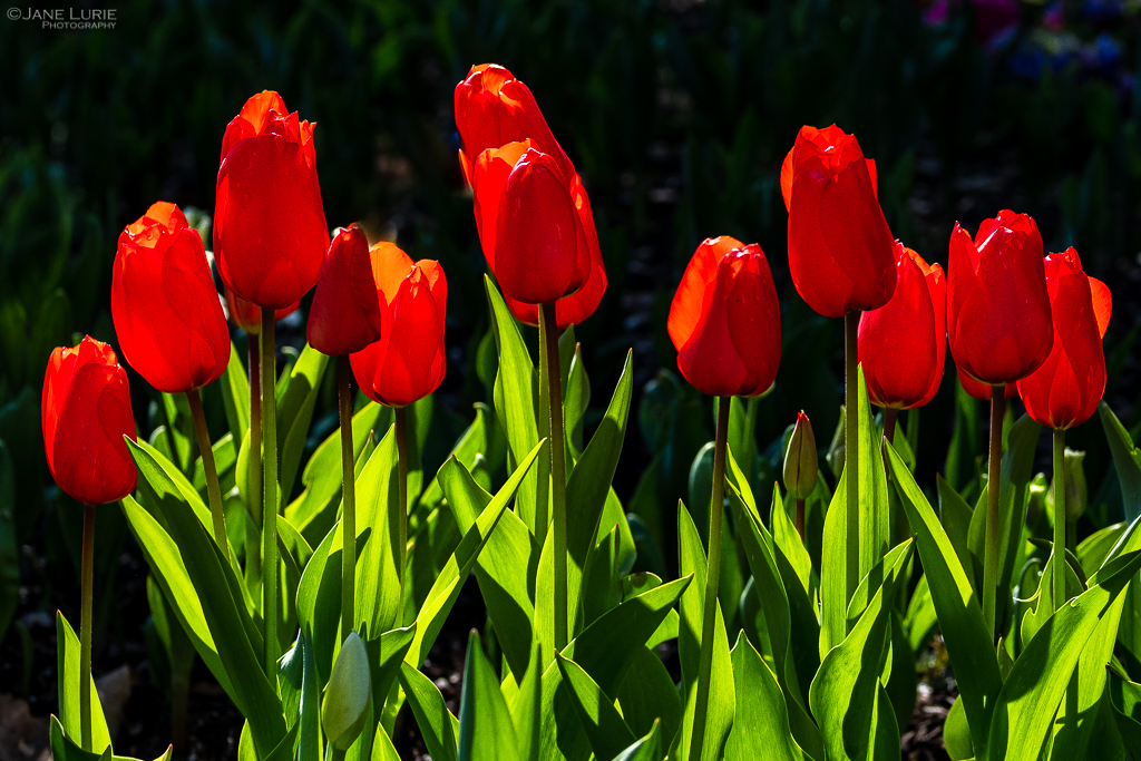 Nature, Photography, Flowers, Plants, Garden, California, Fujifilm X-T2
