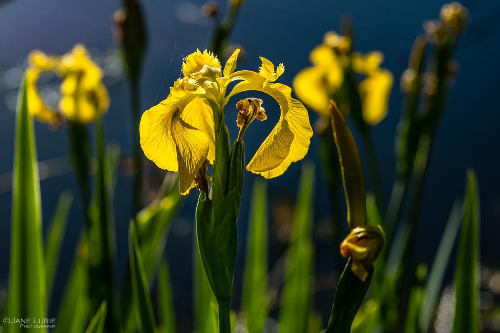 Macro, Nature, Photography, Fujifilm X-T2, Flowers, Wildlife, California