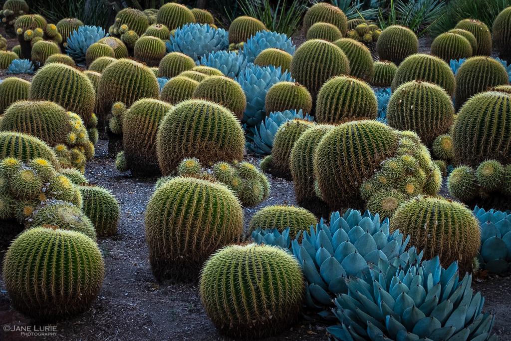 Garden, Nature, Huntington Garden, California, Photography, Fujifilm X-T2, Flowers, Cactus, Trees
