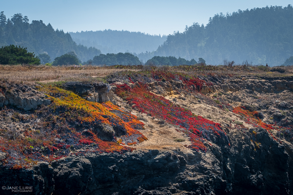 California, Photography, Landscapes, Nature, Fujifilm X-T2, Jane Lurie